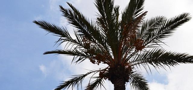 Palme vor blauem Himmel mit Wolken