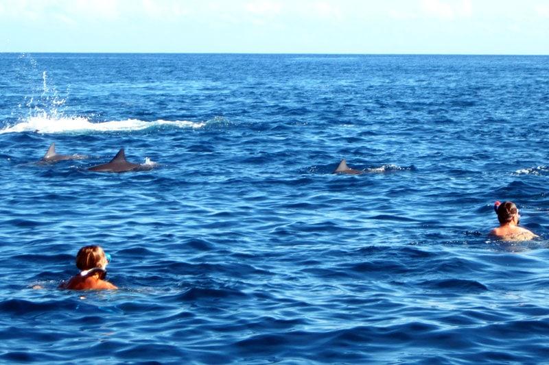 Reisetipps für Verliebte: Schwimmen mit Delfinen auf Mauritius
