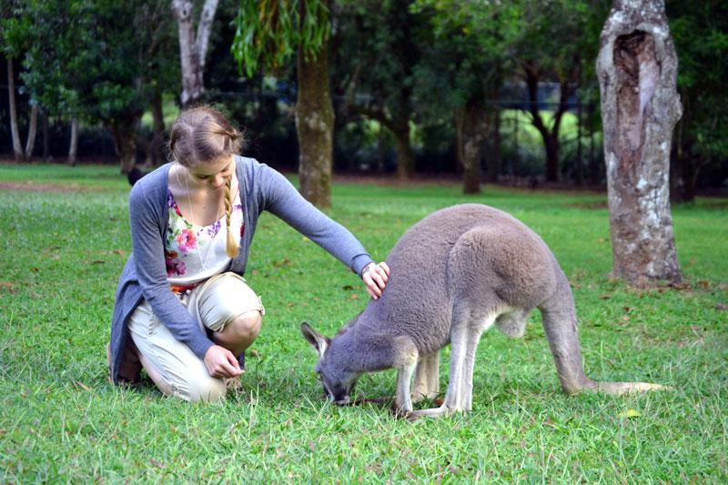 Känguru im Australia Zoo bei Brisbane