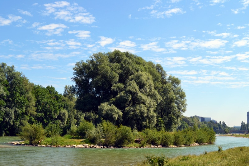 Badestellen an der Isar:Weideninsel am Isar Strand in der Au an der Wittelsbacher Brücke