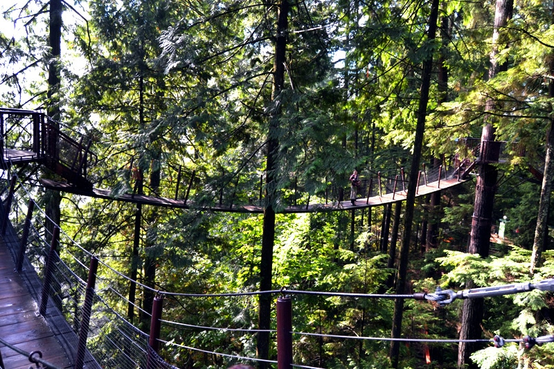 Treetops Adventure im Capilano Suspension Bridge Park Vancouver