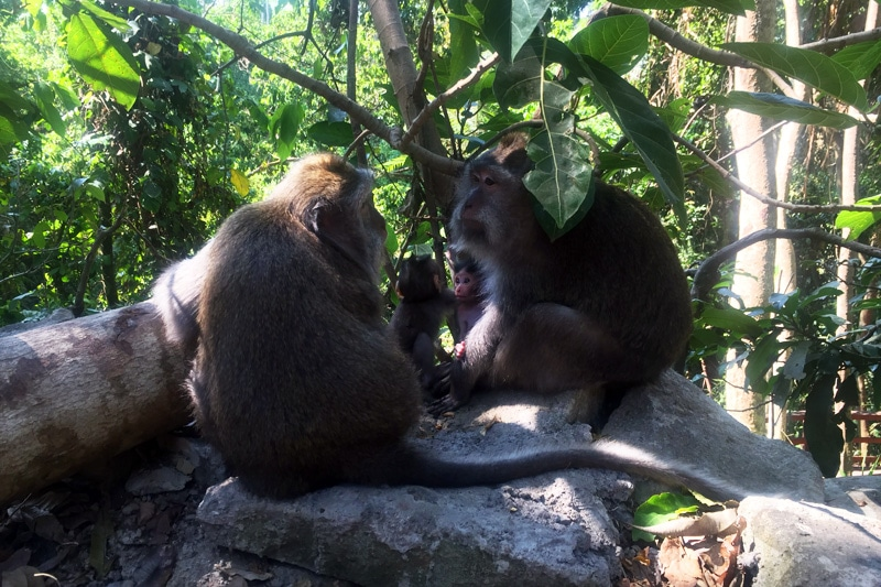 Bali: Monkey Jungle in Ubud