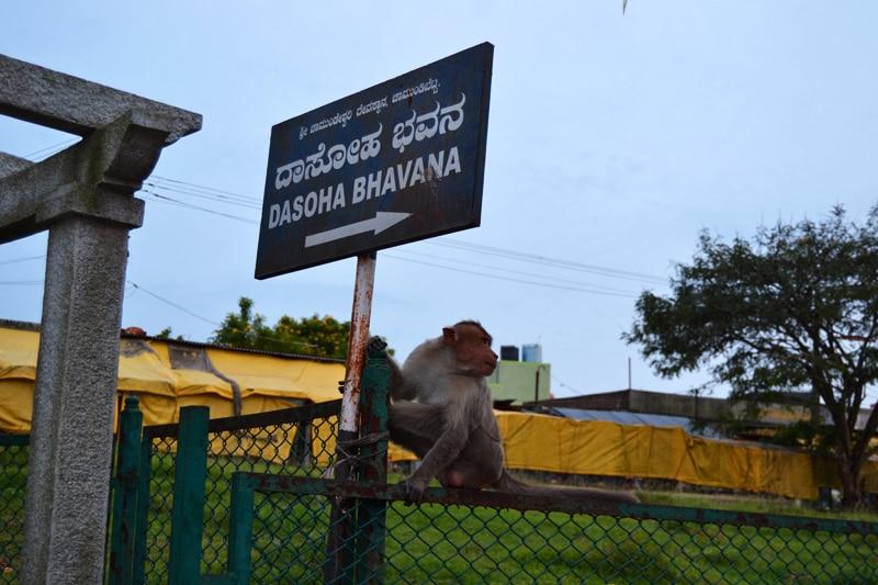 Chamundeshwari Tempel - Chamundi Tempel in Mysore - Affen Monkey