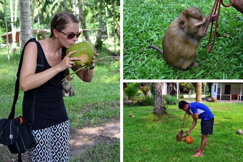 Kokosnussplantagen im Sawee District Chumphon