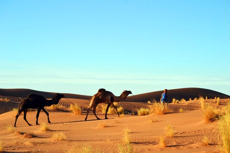 Dromedar reiten in der Wüste von Marokko