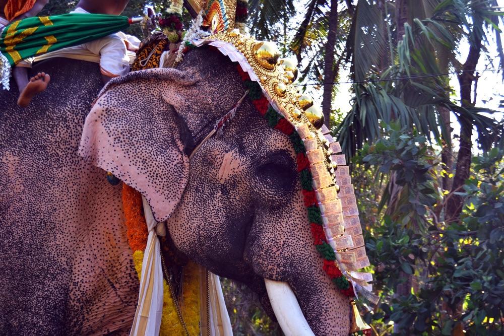 Religiöse Zeremonie mit Elefant am Hindu Tempel in Kerala, Indien