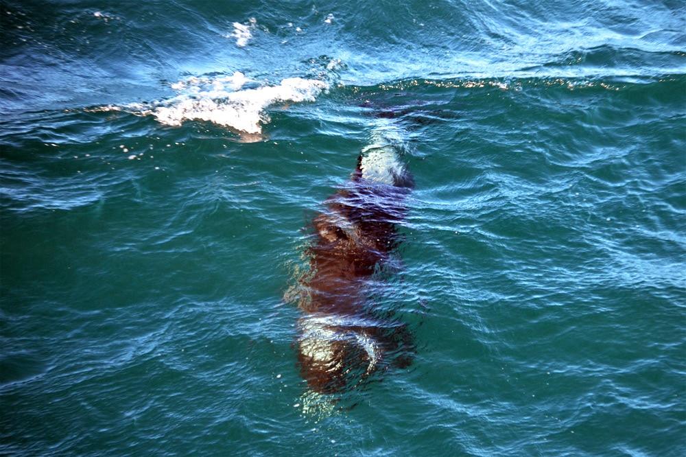 Wale beobachten in Island: Whale Watch mit Elding Reykjavik