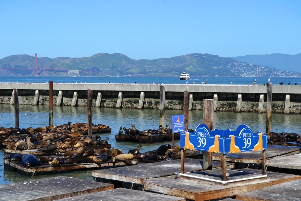 San Francisco Fishermans Wharf Pier 39 Seelöwen