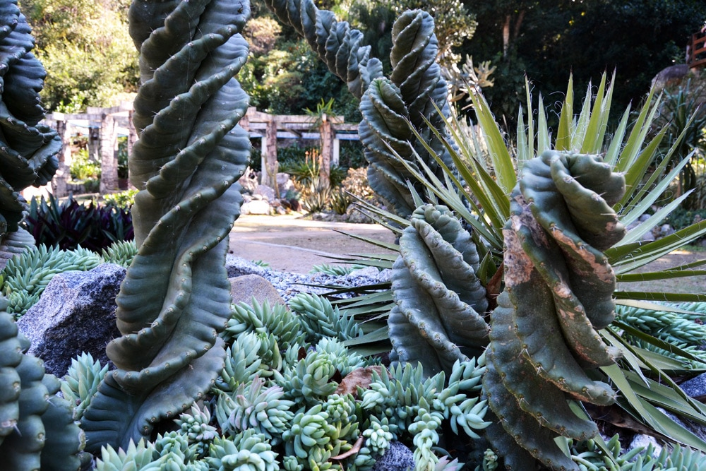 Rio de Janeiro Sightseeing Botanischer Garten Jardim Botanico