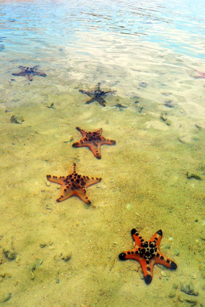 Starfish Island, Palawan, Honda Bay Philippinen