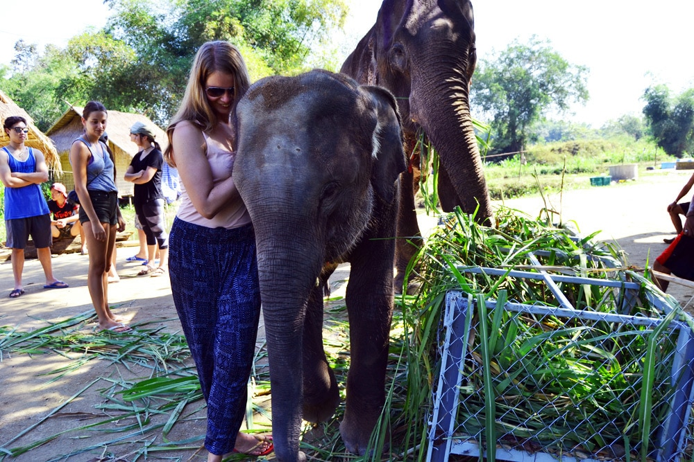 Elephant Retirement Park Chiang Mai - Elephant Sanctuary
