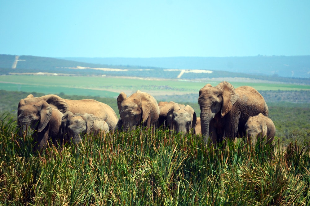 Addo Elefanten Nationalpark