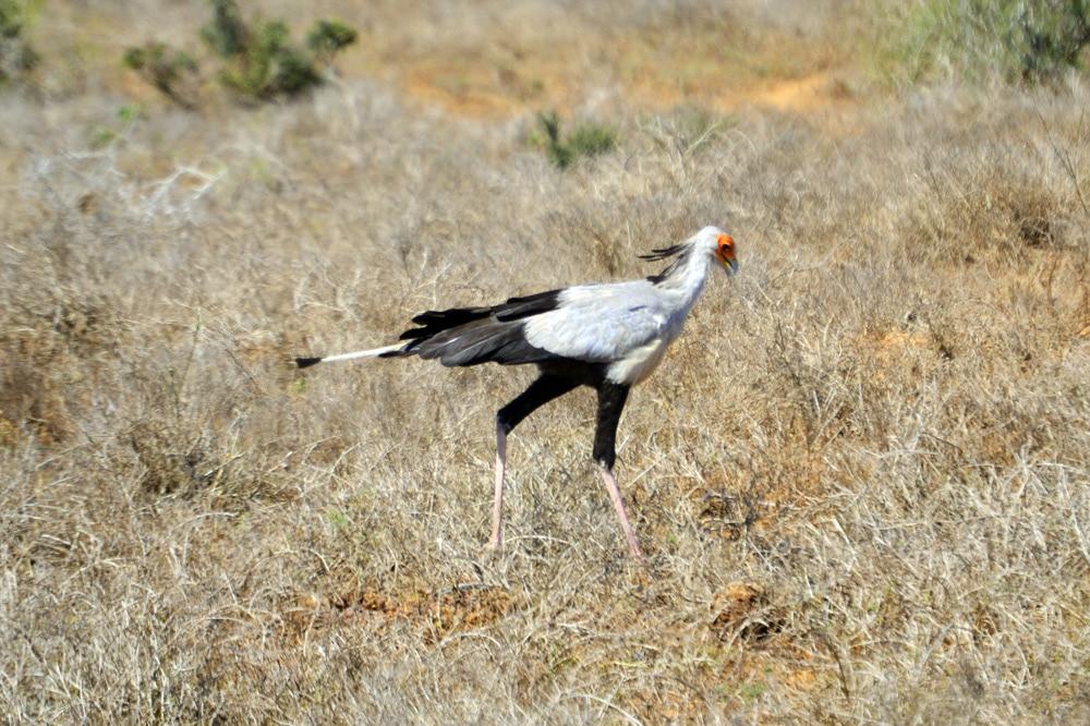Addo-Elefanten-Nationalpark Südafrika: Sekretär