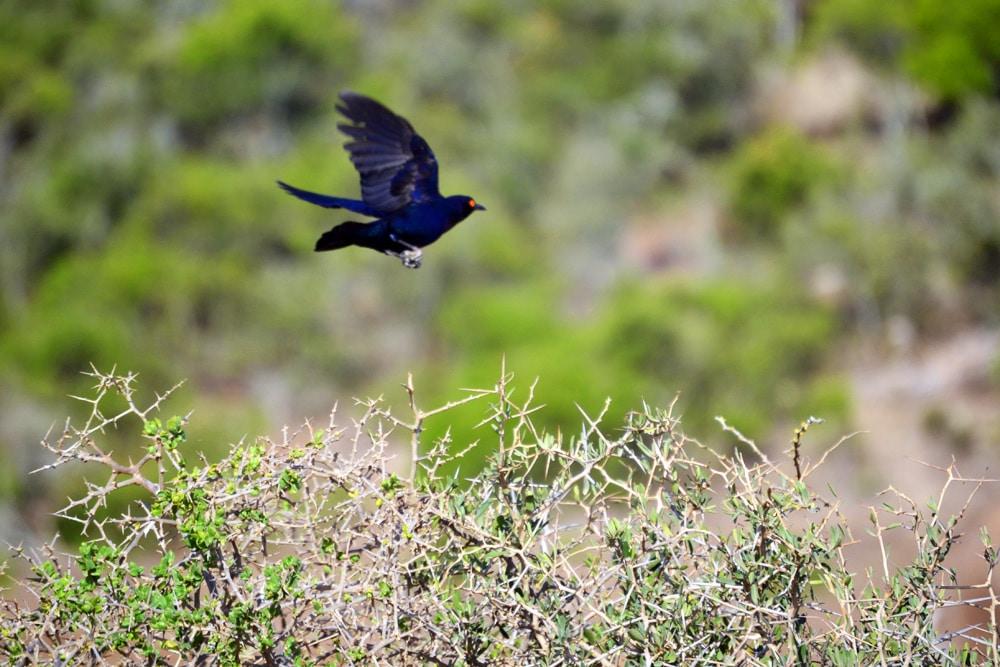 Addo Elefanten Nationalpark exotische Vögel - Garden Route Highlights