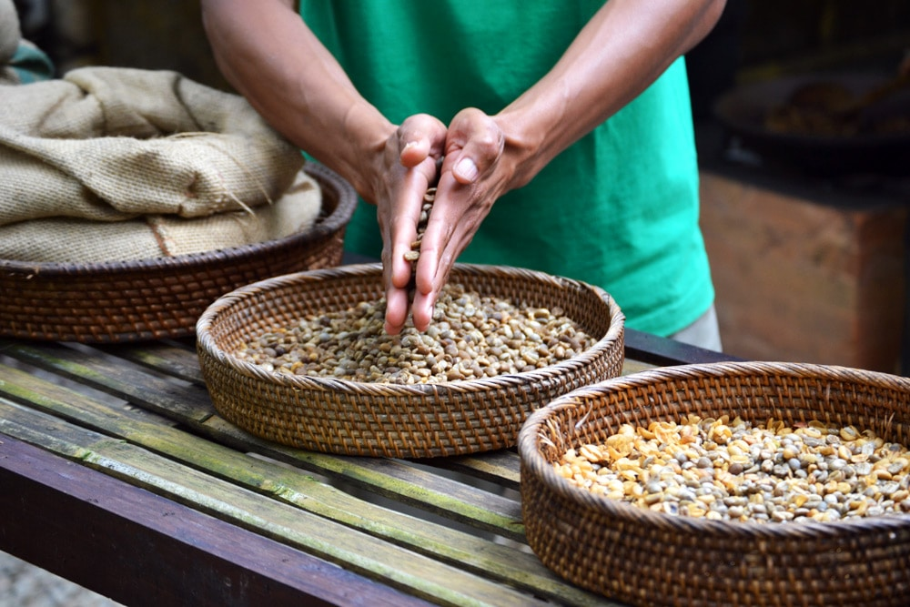 Bali Pulina Coffee Plantations Kaffe Plantage - eine Woche Bali mit BackpackerPack Trips