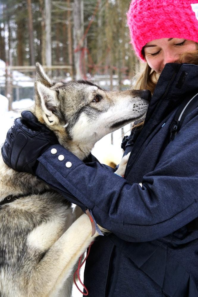 Hundeschlitten fahren im Levi Husky Park Lappland