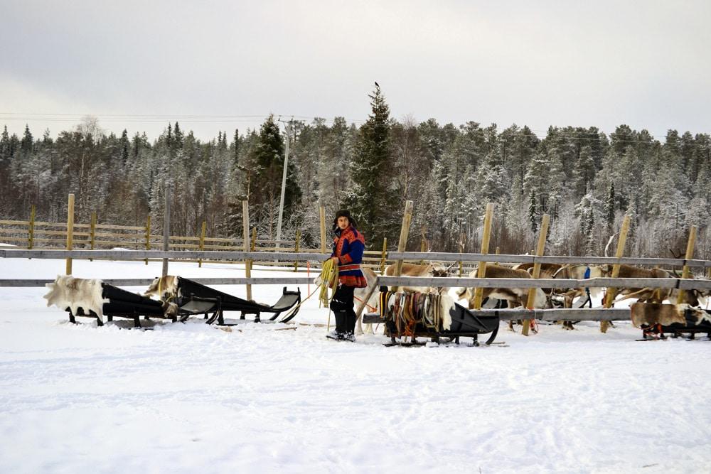 Rentierschlitten fahren auf der Ounaskievari Rentier Farm in Levi Lappland