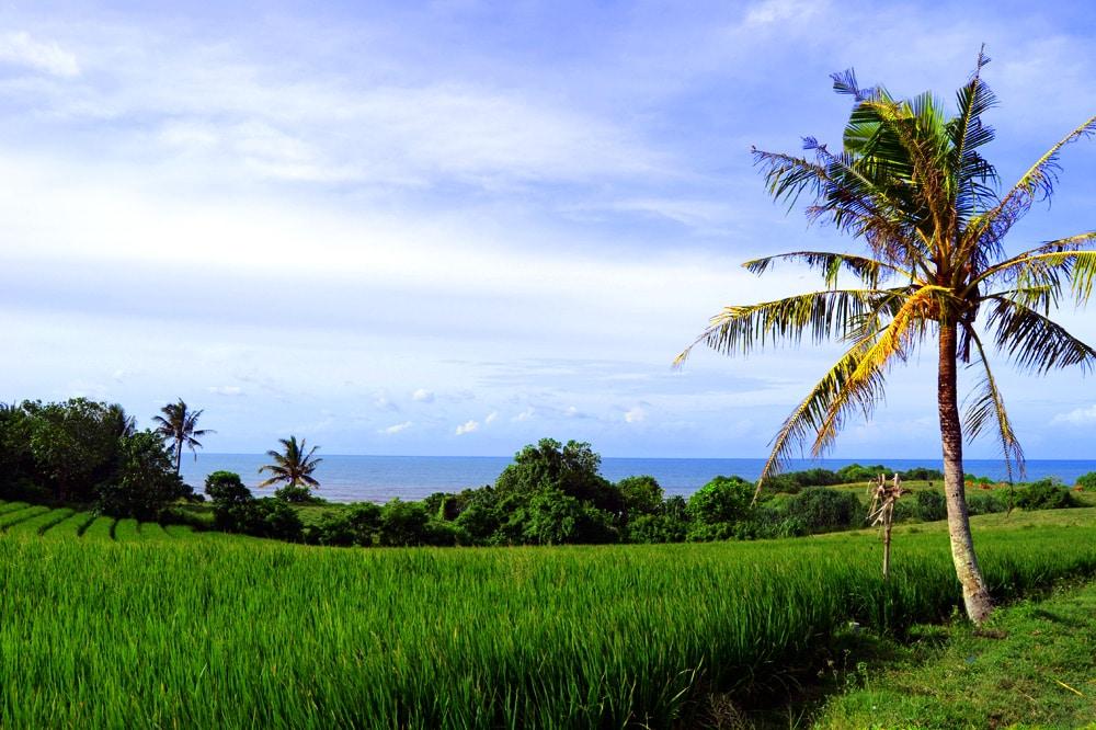 Sahaja Sawah Resort Bali Erfahrungsbericht: Reisfelder