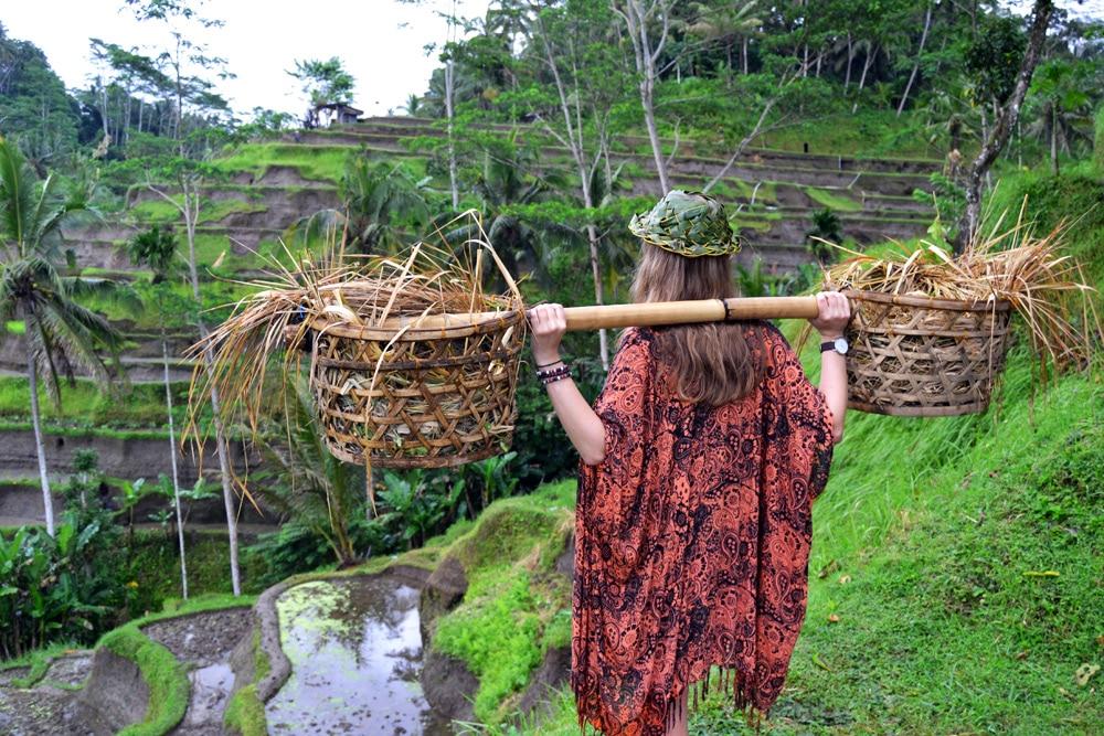 Tegalalang Reisterrassen auf Bali - eine Woche Bali mit BackpackerPack Trips