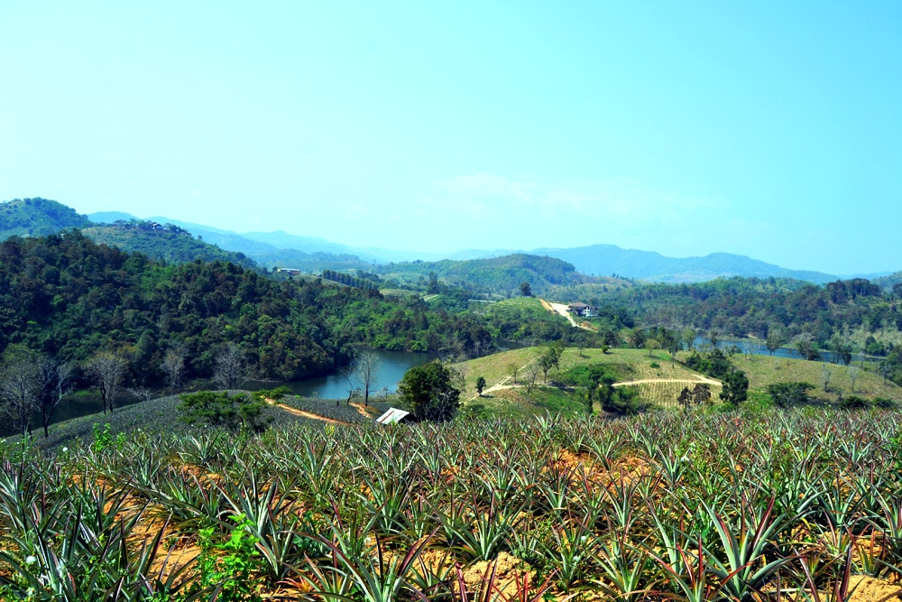 Chiang Rai Valley Resort Doi Hom Fha