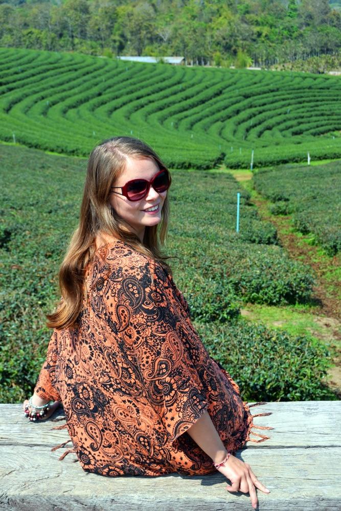Choui Fong Tea Plantation Chiang Rai, Thailand