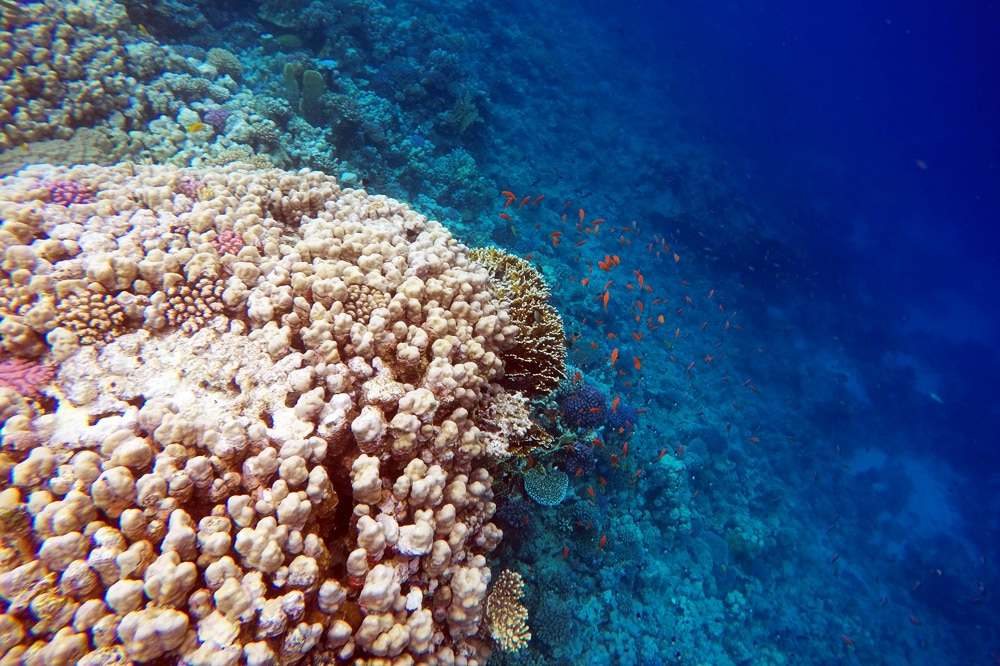 Tauchen Sharm El Sheikh Sunshine Divers Club Ägypten