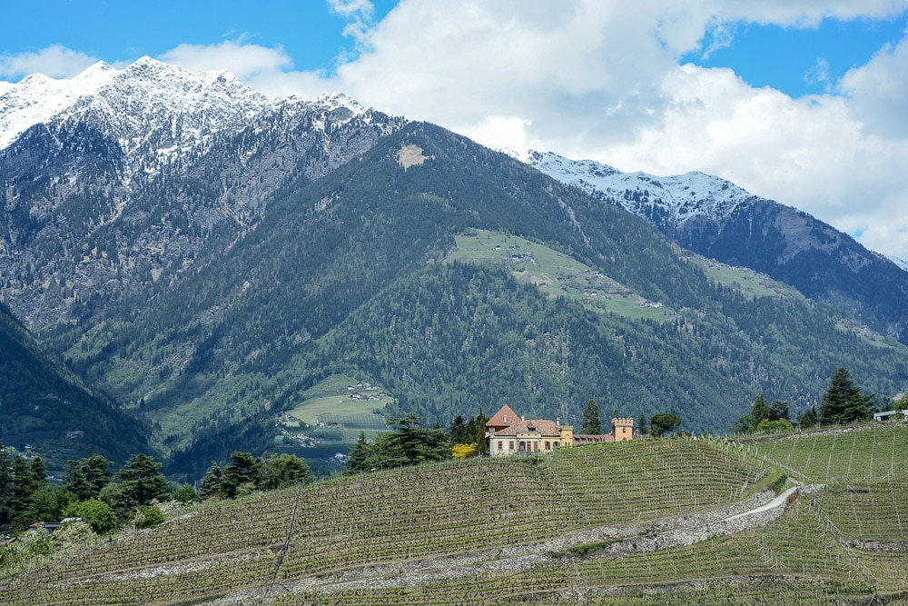 Meran Wein - Weinregion Südtirol
