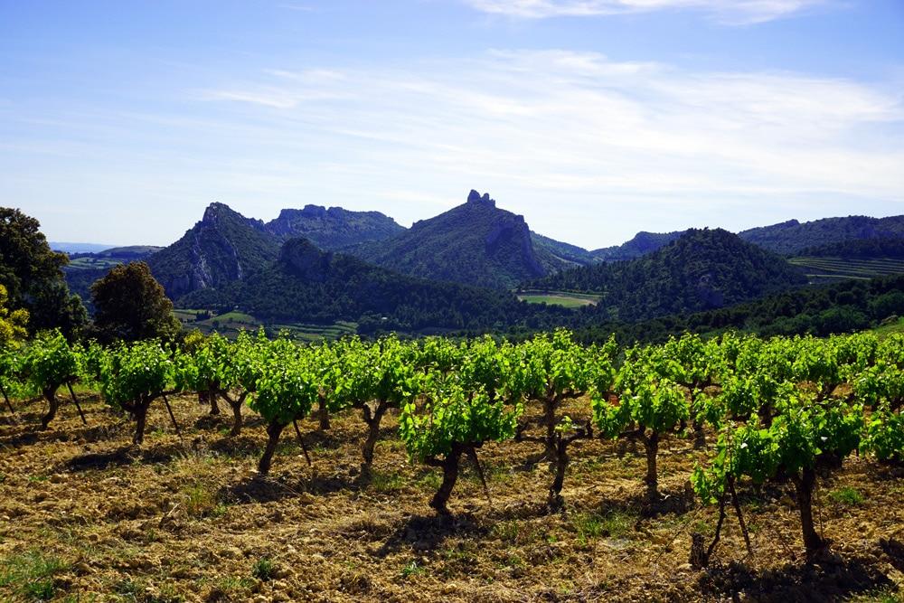 Weinregion Vaucluse - Provence Frankreich Roadtrip - Frankreich Genussreise