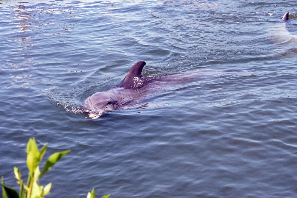 Dolphin Research Center Marathon, Florida Keys Roadtrip