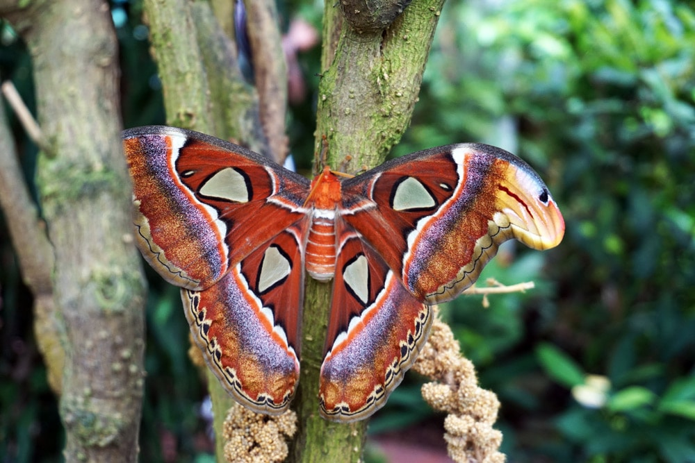 Florida Keys Roadtrip: Butterfly and Nature Conservatory Key West