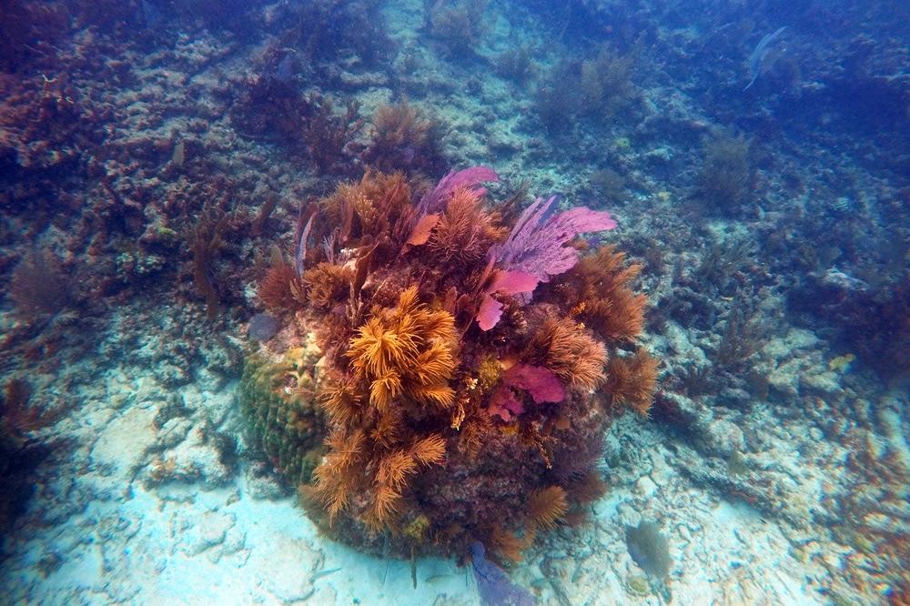 Florida Keys Reisetipps: Schnorchel Tour im Pennekamp State Park key Largo