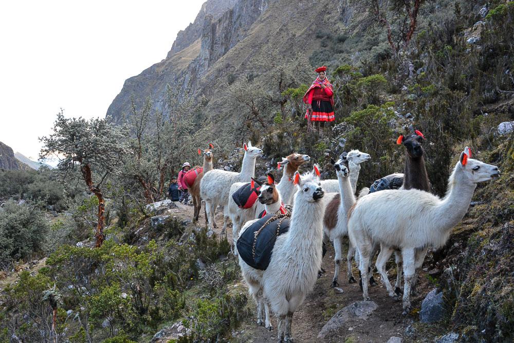 Lares Trek nach Machu Picchu: Tag 3 Trekking - Lamas mit Gepäck