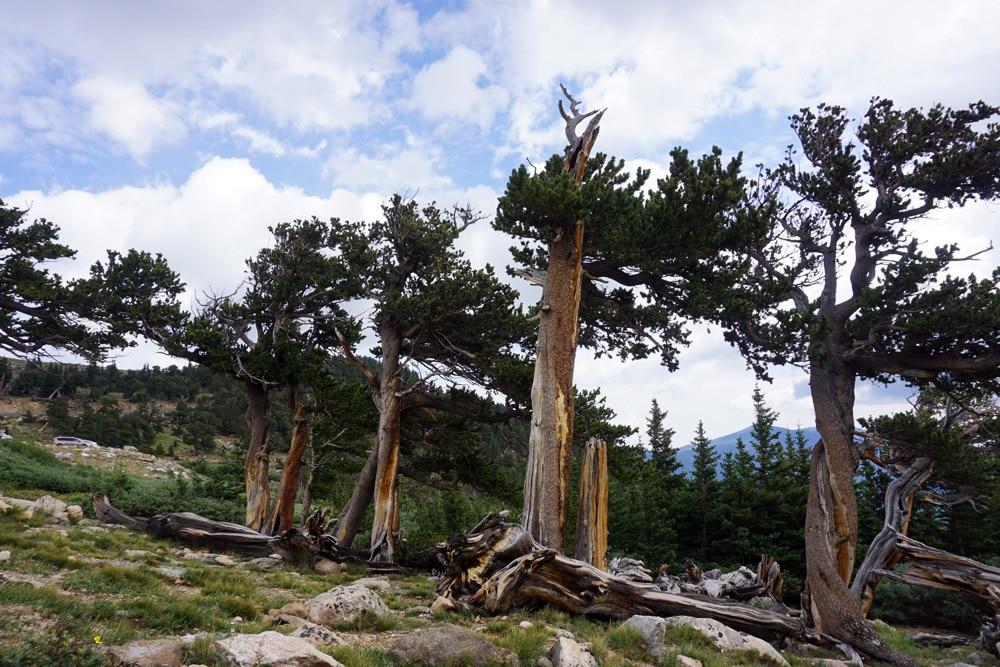 Sehenswürdigkeiten rund um Denver: Mount Evans Scenic Byway
