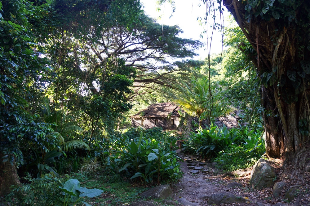 Habitation Ceron - urwald in Martinique