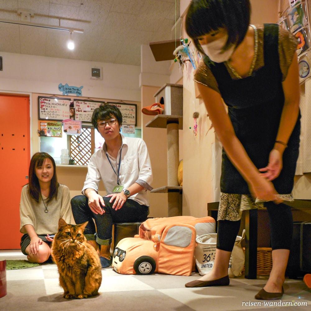 Akihabara in Tokio: Sehenswürdigkeiten und Things to do - Katzencafe mit Katze in Akihabara