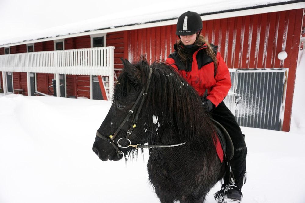 Koli Finnland: Islandpferde reiten im Schnee