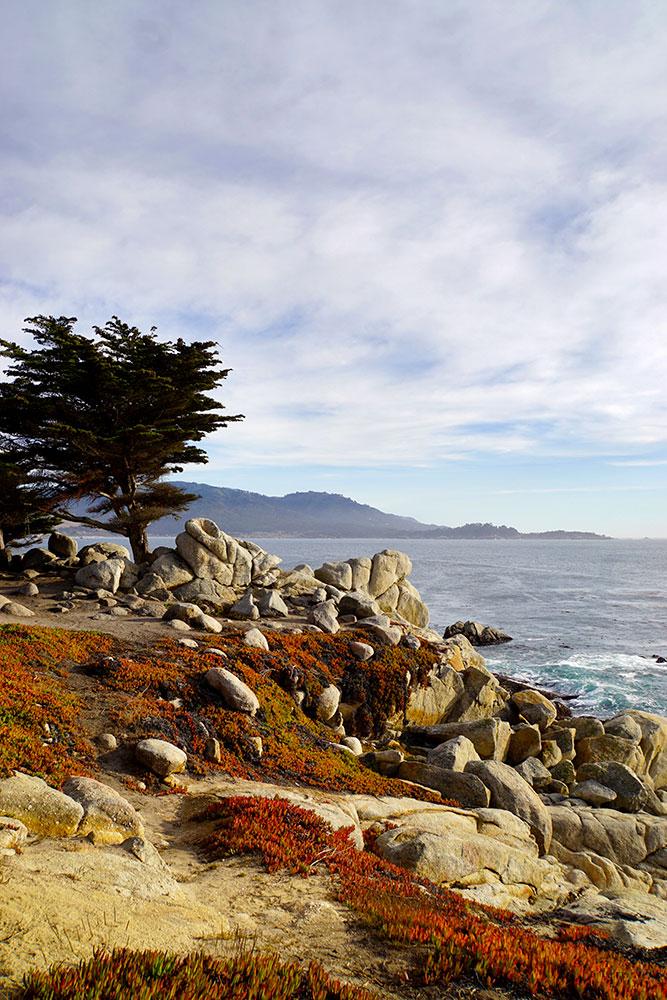 17-Mile-Drive Sehenswürdigkeiten: Highlights auf der bekannten Straße in Monterey - Ghost Trees at Pescadero