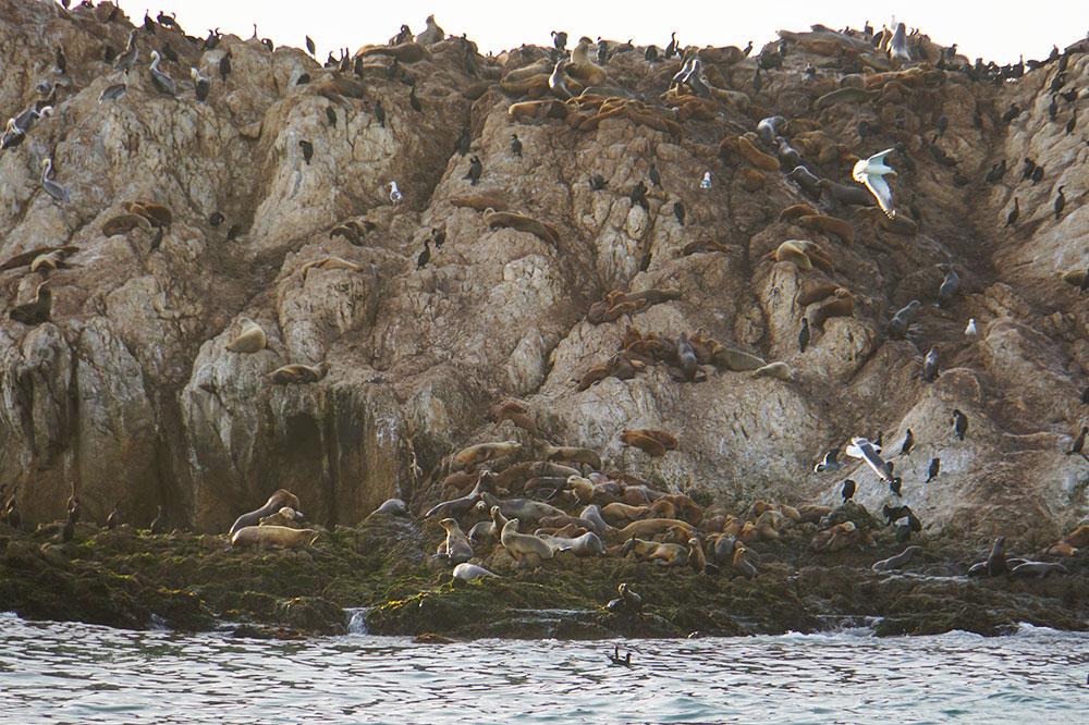 17-Mile-Drive Sehenswürdigkeiten: Highlights auf der bekannten Straße in Monterey - Seal Rock