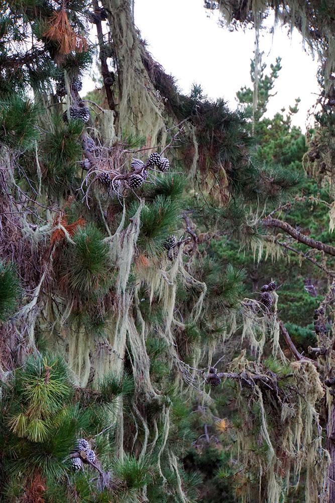 17-Mile-Drive Sehenswürdigkeiten: Highlights auf der bekannten Straße in Monterey - Shepherds Knoll