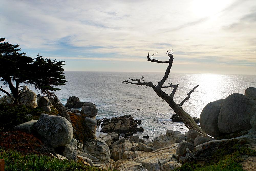 17-Mile-Drive Sehenswürdigkeiten: Highlights auf der bekannten Straße in Monterey - Ghost Trees