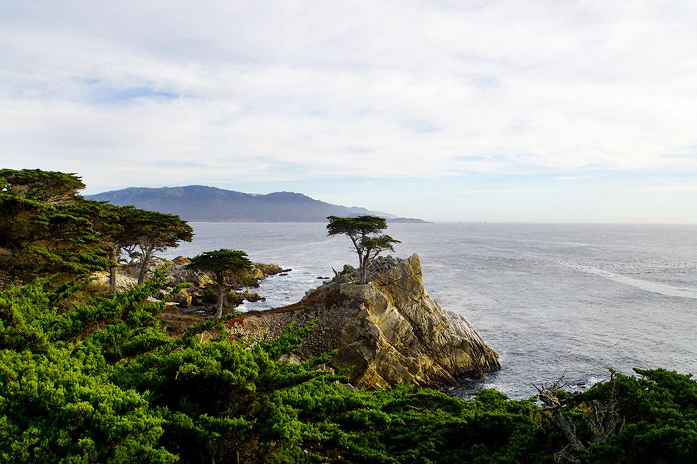 17-Mile-Drive Sehenswürdigkeiten: Highlights auf der bekannten Straße in Monterey - The Lone Cypress