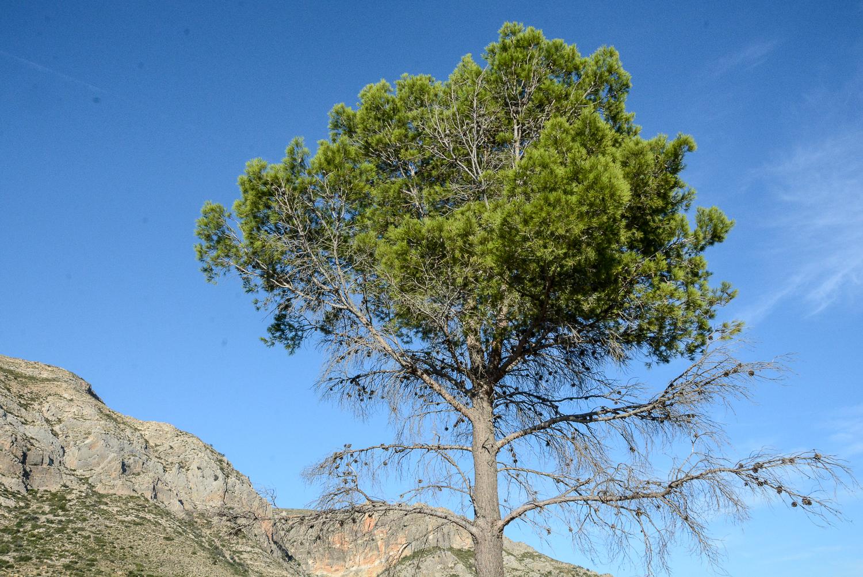 Valencia und seine Berge: Wandern im Hinterland - von Alborache nach Quesa in der Sierra del Ave