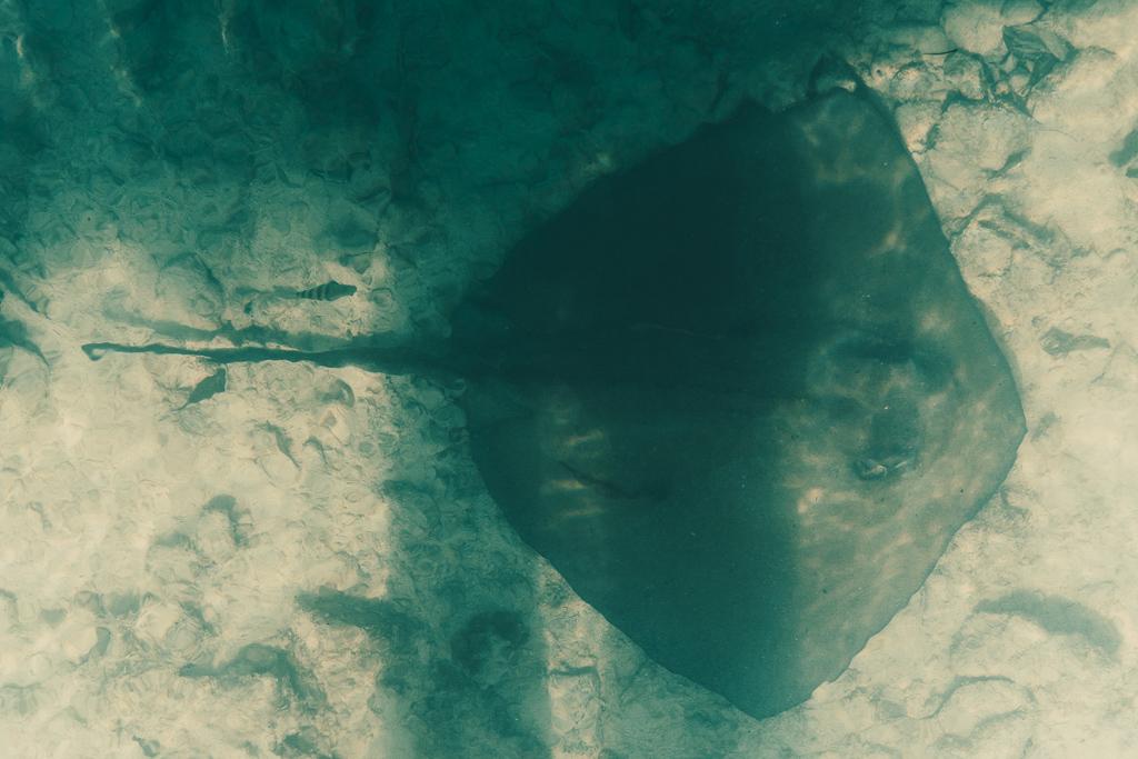 Top 10 Cat Island Sehenswürdigkeiten: Highlights und Strände der Bahamas Insel - Hawks Nest Point Rochen