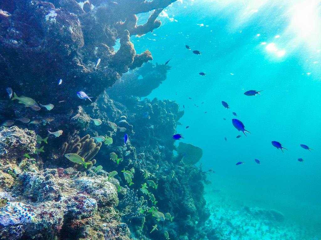Bahamas Reisetipps: 14 praktische Tipps für deine Bahamas Reise - Schnorcheln und Tauchen auf den Bahamas