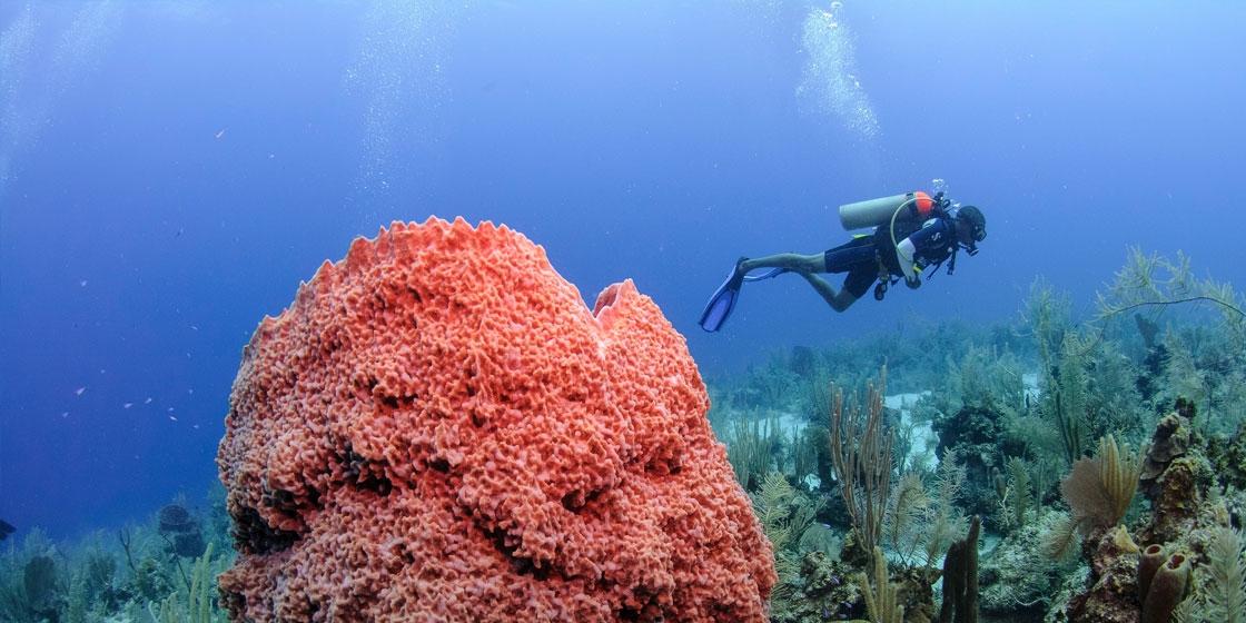 """The """"Elbow"""" an der Südspitze des Turneffe Atolls - Top 5 Belize Sehenswürdigkeiten"""