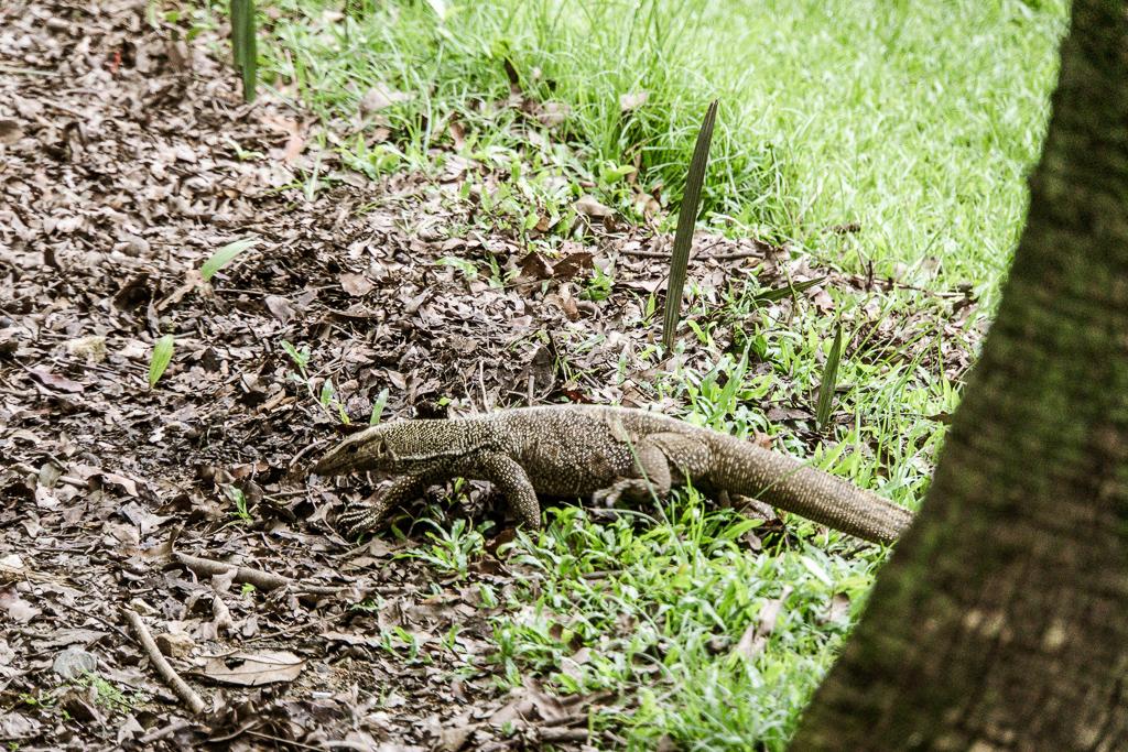 Singapore Botanic Gardens Botanischer Garten - Singapur Top 10 Sehenswürdigkeiten: Alle Highlights für deinen ersten Besuch