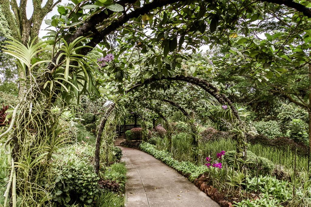 Singapore Botanic Gardens Botanischer Garten - The Esplanade - Boat Quay - Singapur Top 10 Sehenswürdigkeiten: Alle Highlights für deinen ersten Besuch