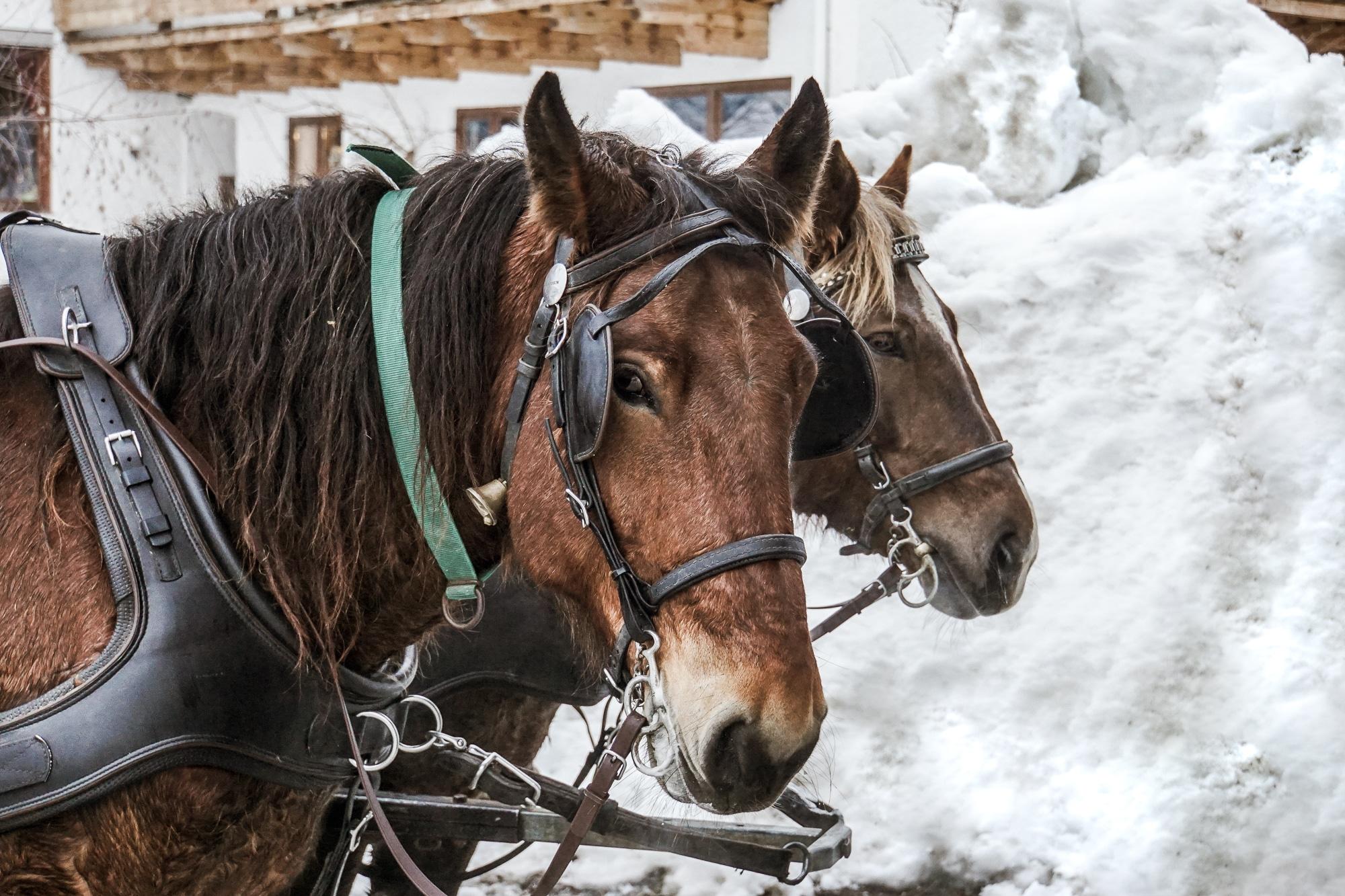 Kaiserwinkl Skiurlaub: Tipps zum Skifahren, Langlauf & andere Highlights - Pferdekutsche fahren Hochkössen