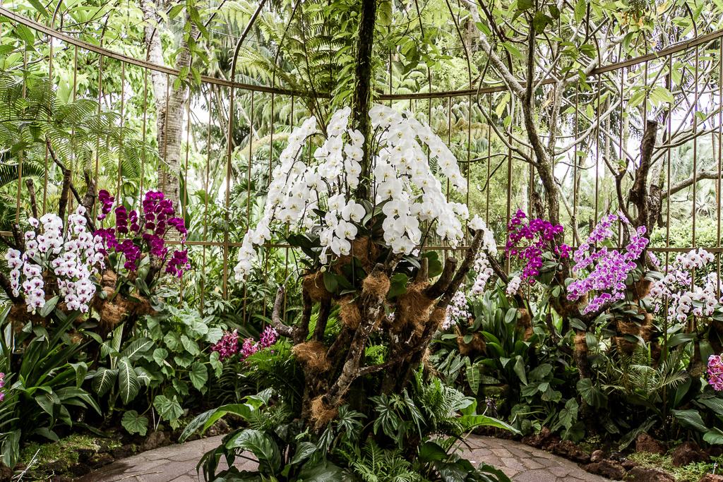 National Orchid Gardens - Singapore Botanic Gardens Botanischer Garten - The Esplanade - Boat Quay - Singapur Top 10 Sehenswürdigkeiten: Alle Highlights für deinen ersten Besuch