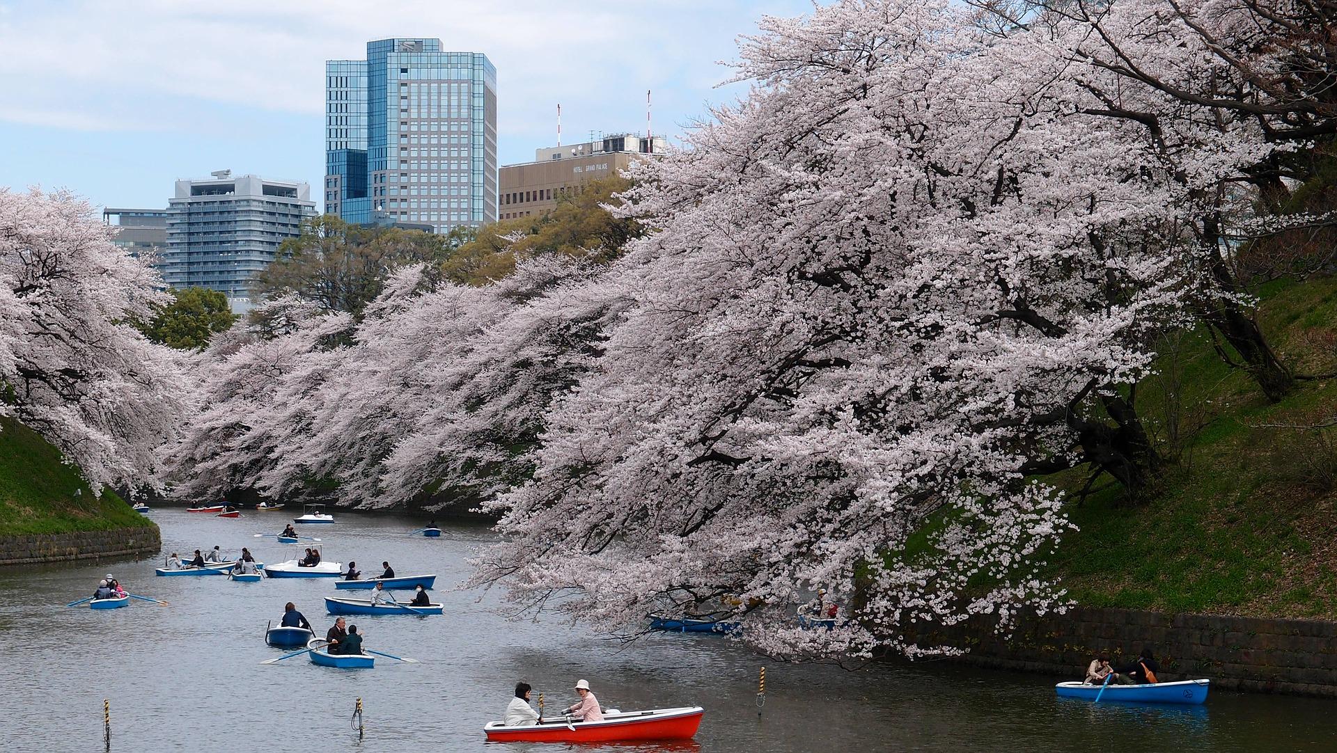 Kirschblüte in Tokio: Die fünf schönsten Orte und Hotspots zur Sakura - Kaiserpalast
